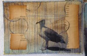 seagull_card