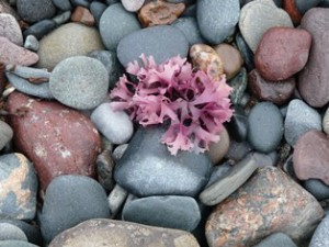 rocks_with_pink-1
