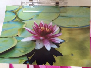 Water Lily - Butchart Gardens in Victoria